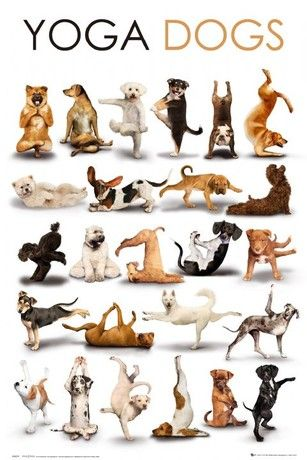 Yoga Dogs Poster Animal Yoga Dog Poster Dog Doing Yoga