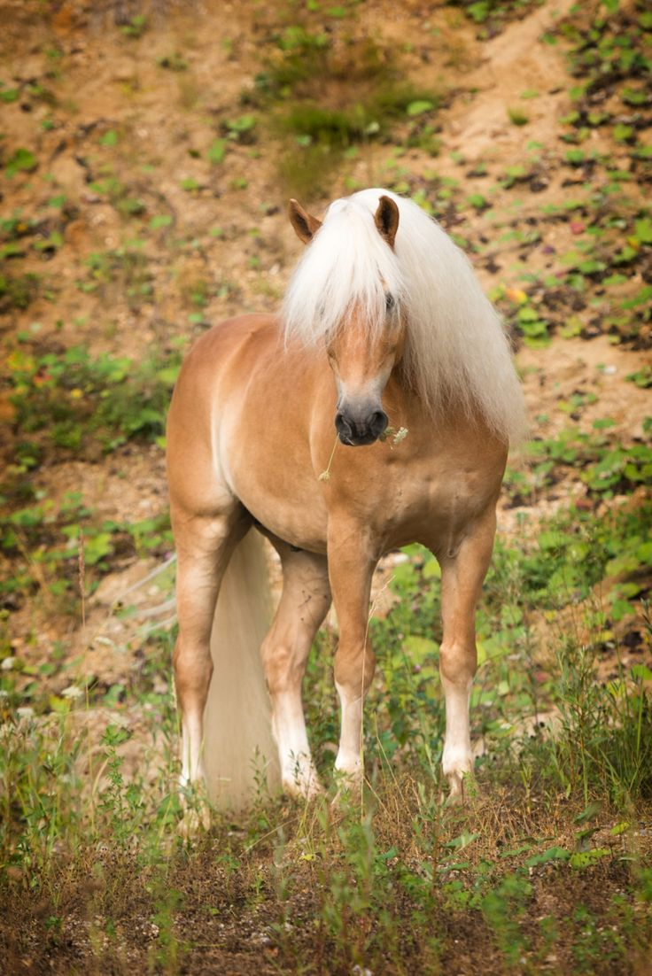Looks like a pony I had once Bit of Gold Double Grand of Clover Hill We called  Horses