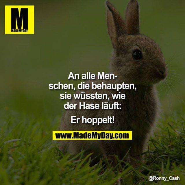Hasen hoppeln | Sprüche / Weisheiten | Funny, Humor und Funny memes