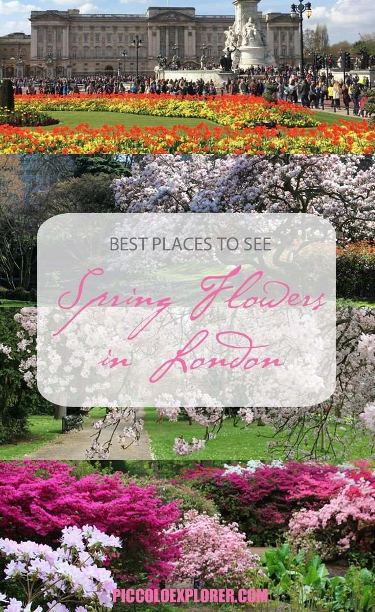 Best Places To See Spring Flowers In London Pinterest Spring