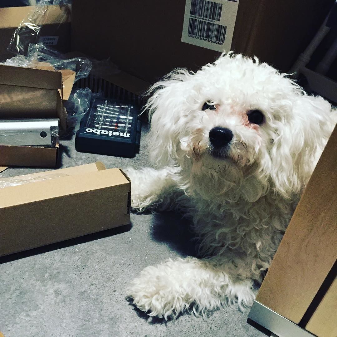 Can we move in yet? #rolf_the_dog #rolfthedognorway #rolf #bichonfrise #bichonsofinstagram #dogsofinstagram #dogstagram #mydogiscutest #hundeliv #ladysvalper #iruffdogs #puppylove #happypuppyclub #lovemyfamily #lovemyhumans #petcostar #dogdaysofinstagram #topdogphoto #Dog_Features #dogsofinstaworld #dogsandpals #lacyandpaws #puppiesofinstagram #bichonworld_feature #dailydogg_features #poshpamperedpets #dyreelskere #dailydogfeatures #puppy_tales by rolf_the_dog