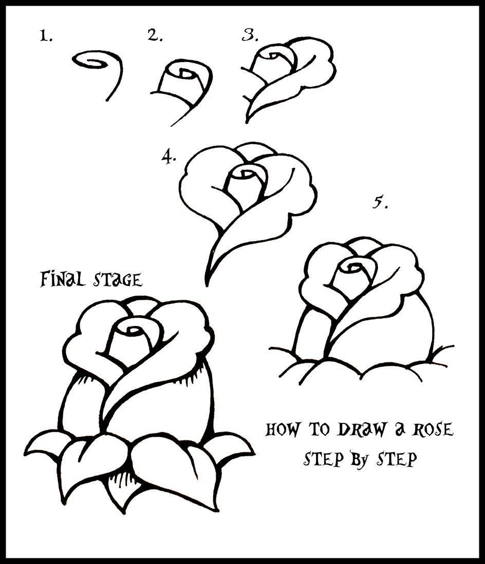 Easy Drawings Roses Step