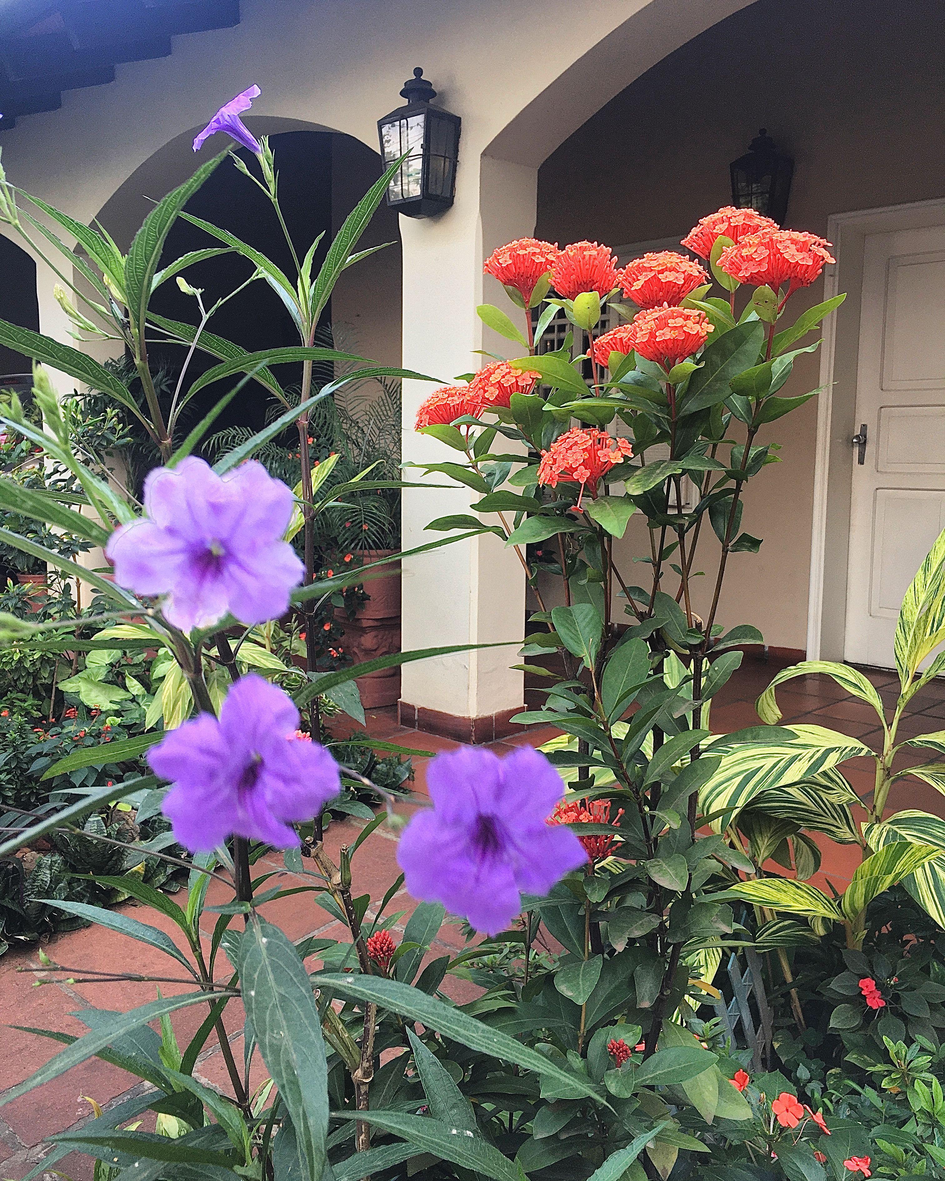 Pin De Rosa Laconich En Flores Del Paraguay Flores Paraguay