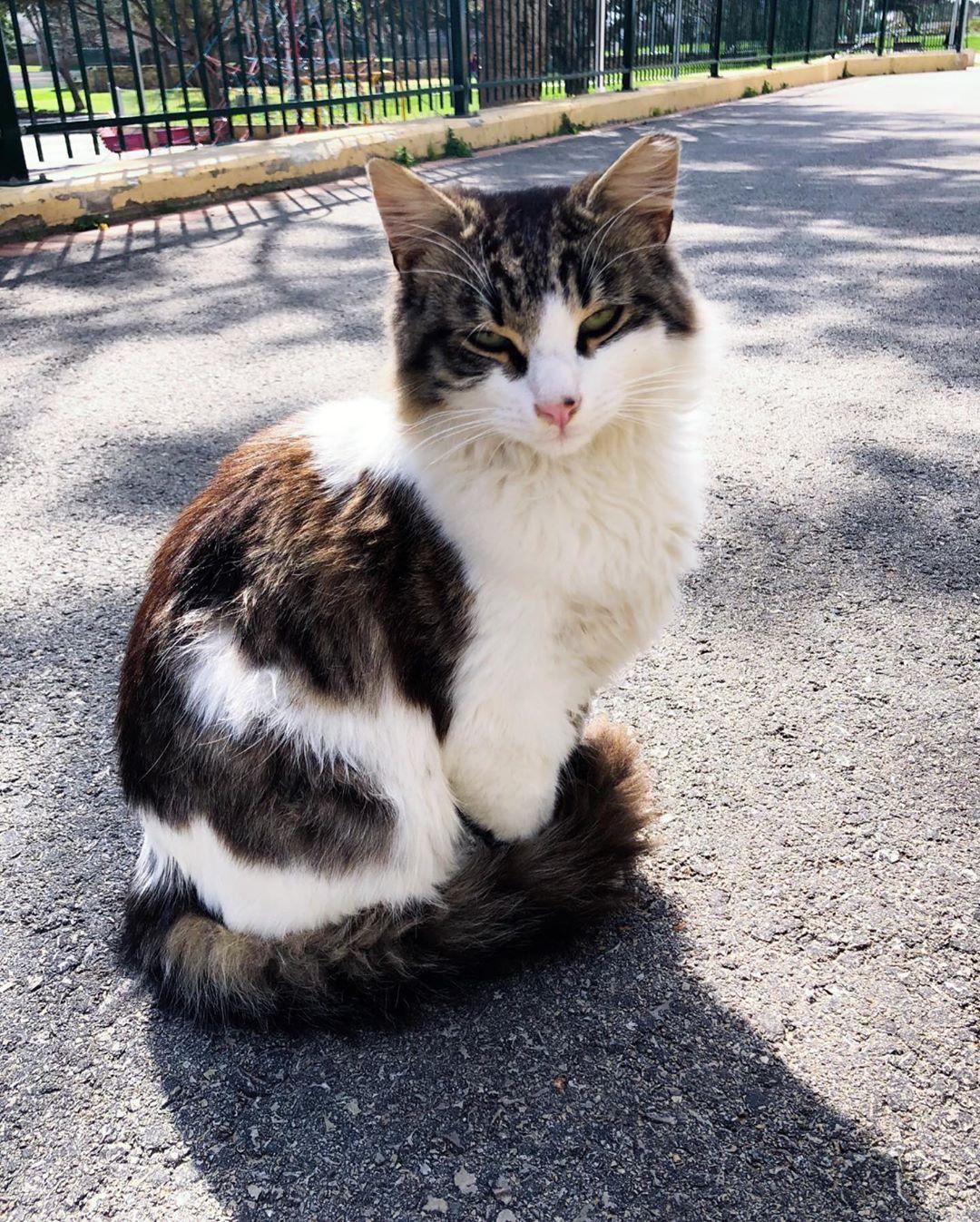 Good morning, beautiful 🌻 . . . . . .  #streetcatsofisrael #streetcat #streetcats #israel #telaviv #battam #jerusalem #haifa #cat #cats #catsofinstagram #cats_of_instagram #catlover #catlovers #catstagram #catoftheday #catsoftheworld #catsoftheday #catsagram #cat_of_instagram #catloversclub #catlife #catslife #catphoto #catwoman #ilovecats #instacat