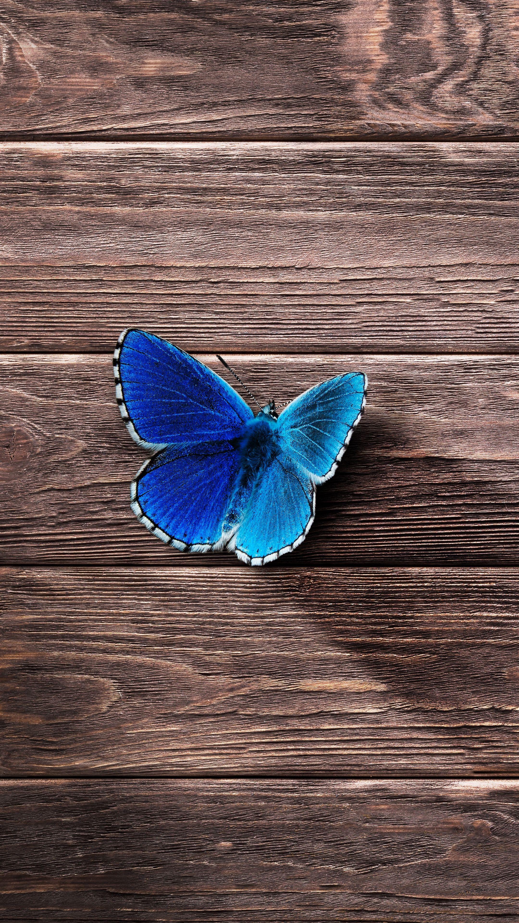 Wallpaper Cave Blue Butterfly Wallpaper Aesthetic