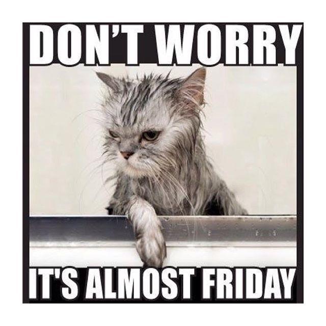 Thursday - Friday   thursday humor offices funny # - Thursday – Friday   thursday humor offices funny   thursday humor