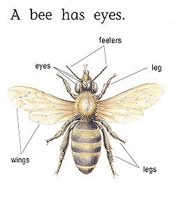 Honey Bee Anatomy Top View   sample bee diagram back to top 2 ...