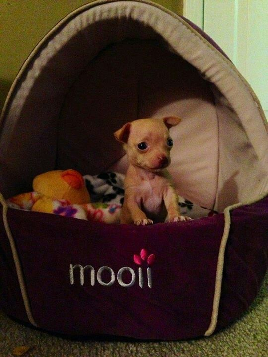 Adorable And I Love The Puppy Bed My Max Would Love It Puppy