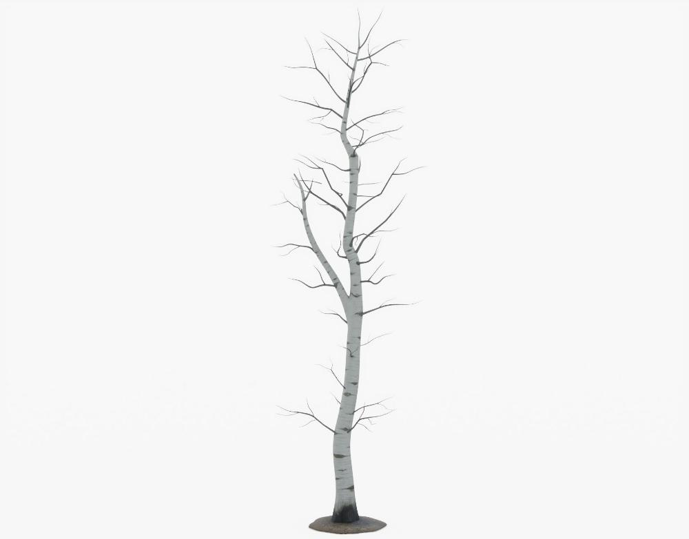 3d Model Bare Aspen Tree Cgtrader In 2020 Aspen Trees 3d Model Aspen
