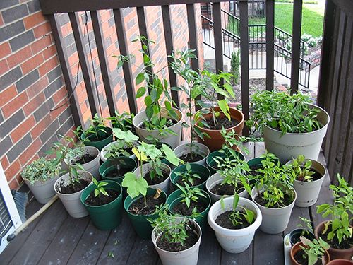 Small Container Garden On Patio