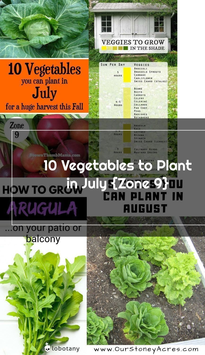 It S Not Too Hot To Garden Plant These 10 Vegetables In July For A Huge Ha Plants Vegetables Container Vegetables