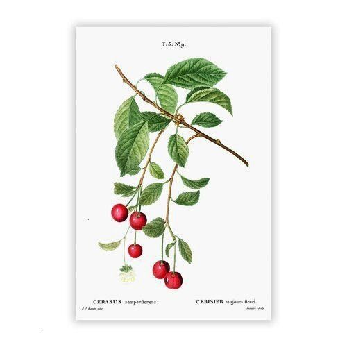 Box Art Poster Cherry Tree Branch by PierreJoseph Redoute  Box Art Poster Cherry Tree Branch by PierreJoseph Redoute  Pink SakuraCherry Blossom Clipart Collection Fine Ar...