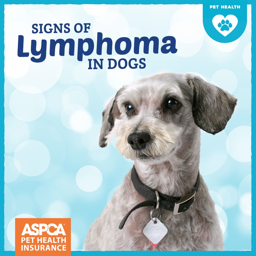 Signs Of Lymphoma In Dogs Lymphoma In Dogs Dogs Pet Health Insurance