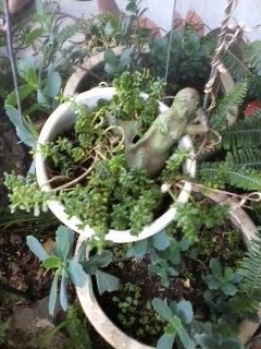succulents and sedums - love the gray/green color and so does the mermaid