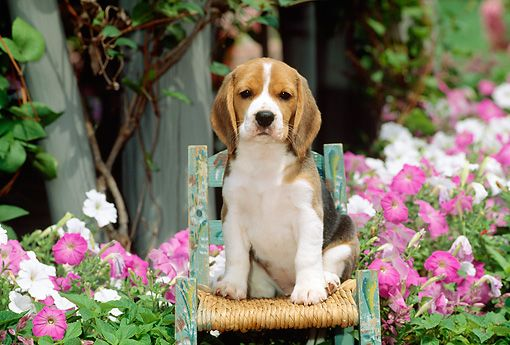 love the beagle and the yard, cute chair