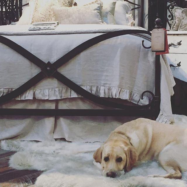 This Cute Pup Would Rather Be Relaxing On The Arhaus St
