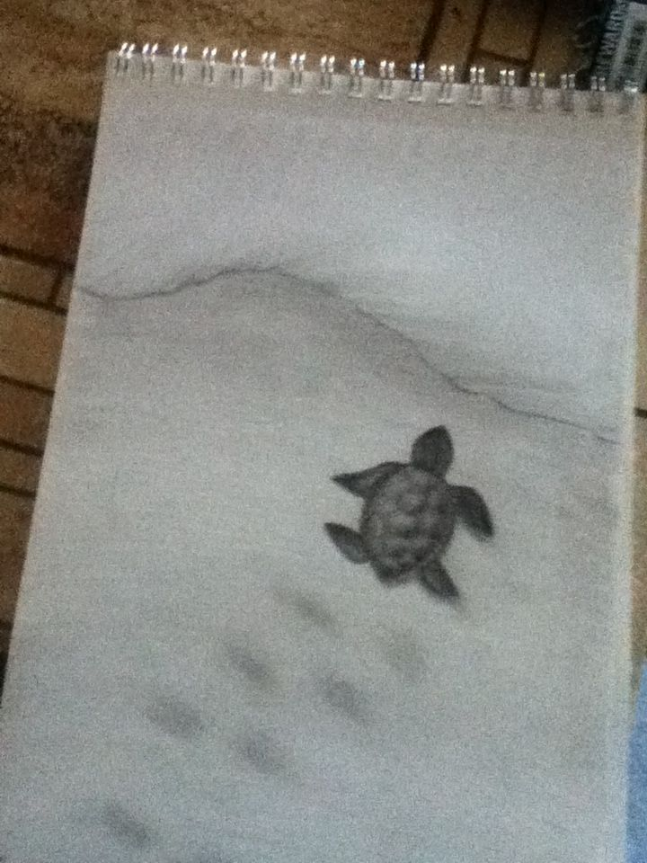 My Baby Sea Turtle Drawing Art Cute Turtle Tattoo Art