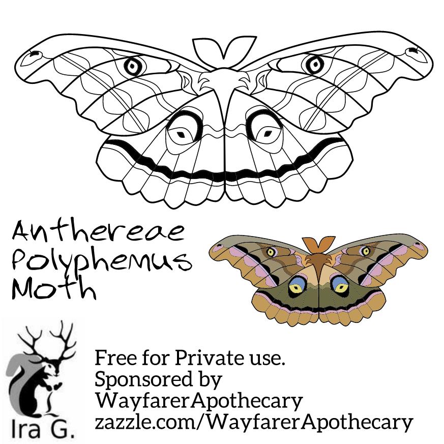 Moth Coloring Templates Wayfarerapothecary In 2020 Moth Templates Hawk Moth