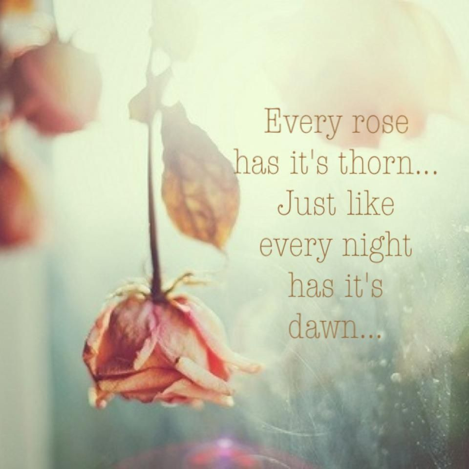 Every Rose Has Its Thorn Just Like Night Dawn
