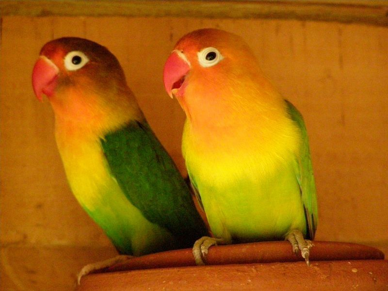 Types Of Pet Birds Things Before You Buy The Pet Birds Pet Shop Ahmedabad Pet Birds Types Of Pet Birds Buy Pets