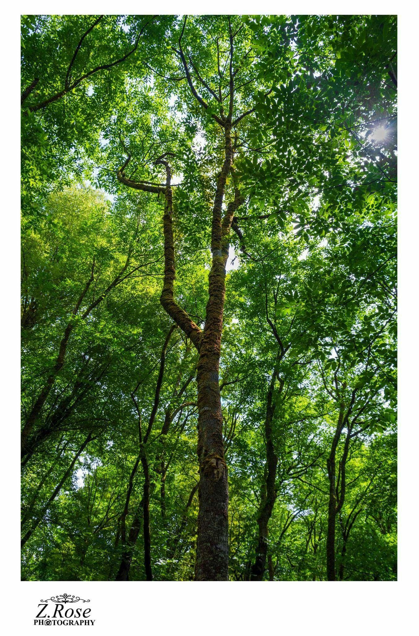 إل هي ي ط ول التجائي إل يك وي أ م ر ني اليــأس أن أنتهي فم ا أ قبل القــ ل ب إلا علــ يك وما عدت إلا ب م ا أشــتهي صباح الخير Plants Photography Tree