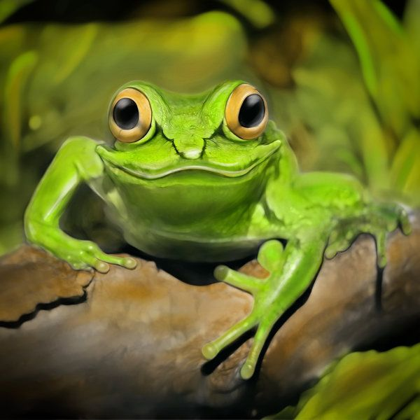 Amazing Frog: Little Frog By Photoplace (print Image)