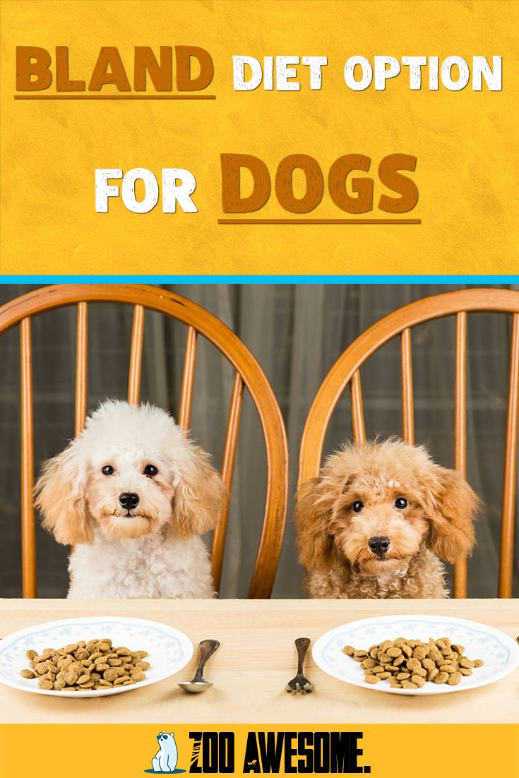 Bland diet option for dogs what you need to know in 2020