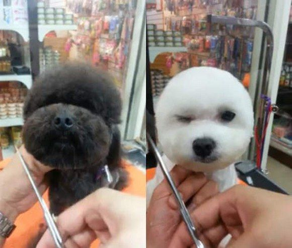 Taiwanese Pet Groomers Give Haircuts To Small Dogs To Make Their