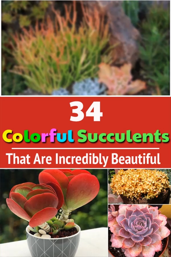 34 Colorful Succulents That Are Incredibly Beautiful