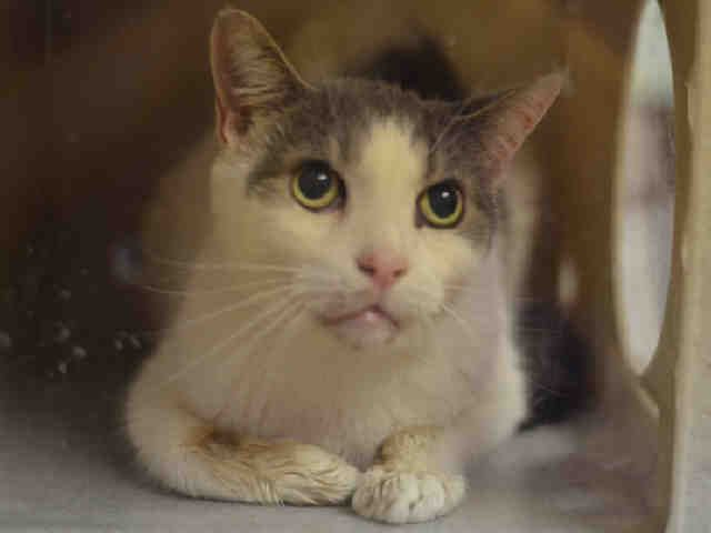 GUINESS - A1082079 Sweet older boy who needs someone who is mature enough to understand him. He just needs to get off DEATH ROW first! Please help this poor guy get a break. SHARE him around. Please.
