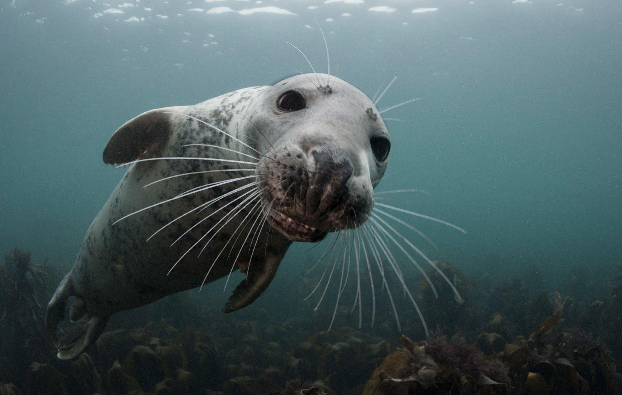 тюлень плавает картинка главными параметрами объектива