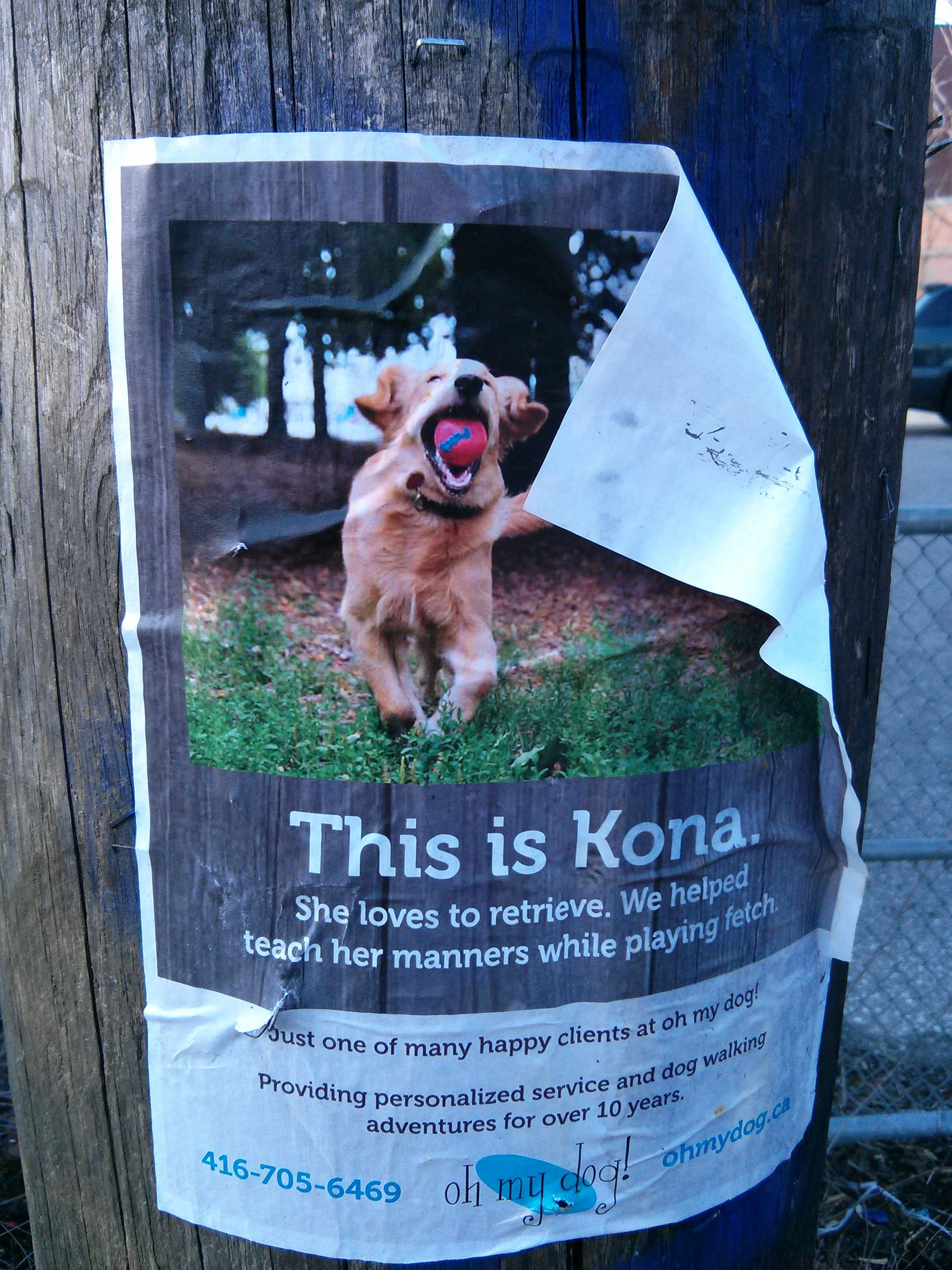 5 marketing lessons from the neighborhood dog walker