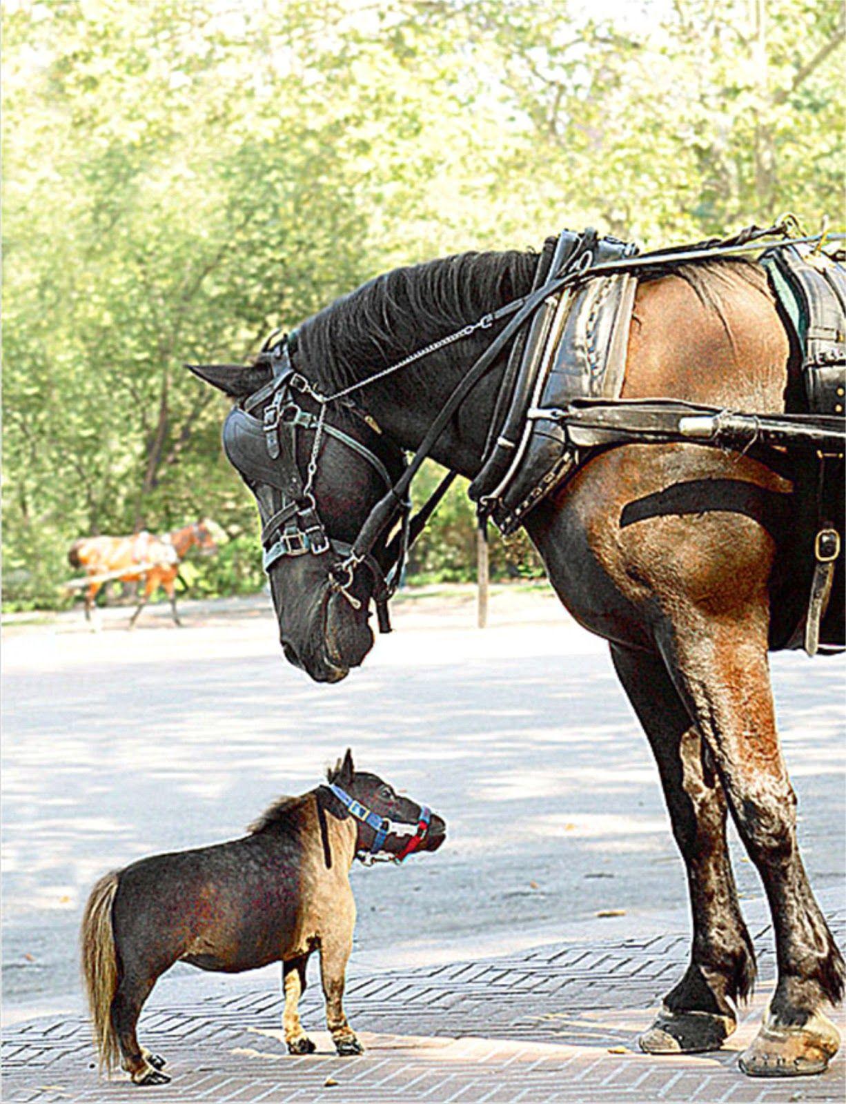 Funny Horse Thumbelina Kuda Terkecil Di Dunia Animals