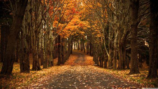 Sundown Wallpapers Autumn Wallpaper Hd Desktop Wallpaper Fall Fall Wallpaper
