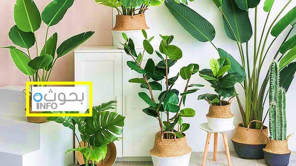 نباتات صناعية للزينة أنواعها والعناية بها Pergola Patio Pergola Plants