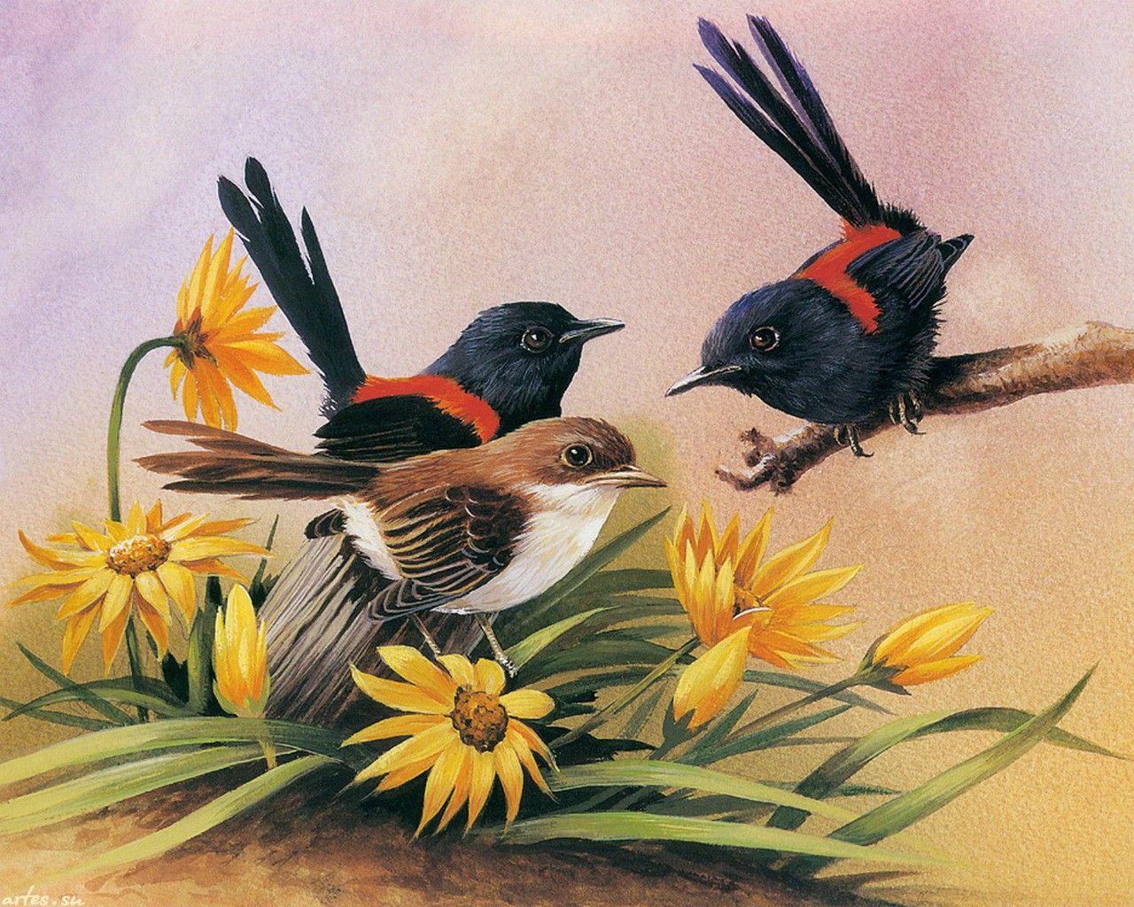 коко рисунки красивых птиц на цветах белух