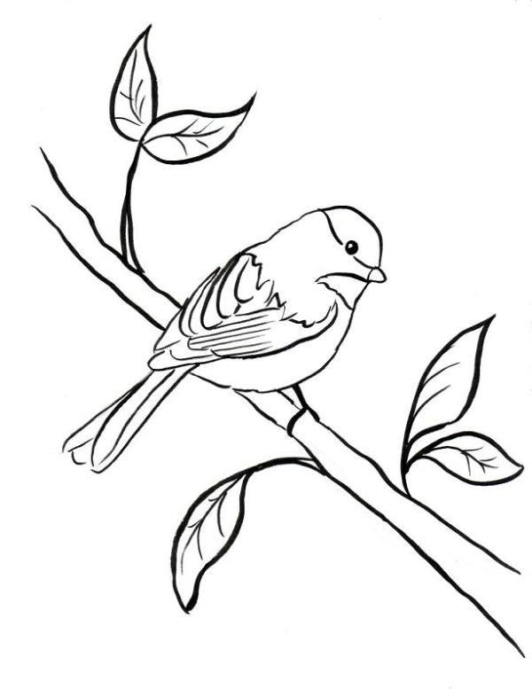 Chickadee Coloring Page Samantha Bell Bird Coloring Pages Free Coloring Pages Chickadee Art