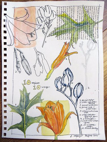 from my sketchbooks 10 objects 10 ways