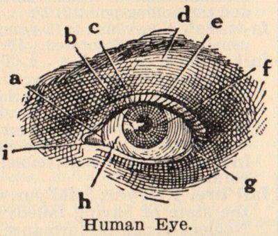 Vintage Clip Art - Eye Diagram | Clip art, Graphics and Eye anatomy
