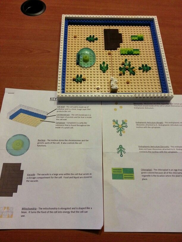 Plant cell model with key lego plant cell model pinterest cell plant cell model with key publicscrutiny