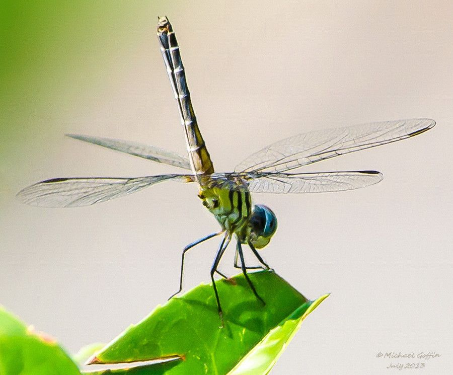 Perched on a Leaf by MICHAEL GOFFIN on 500px