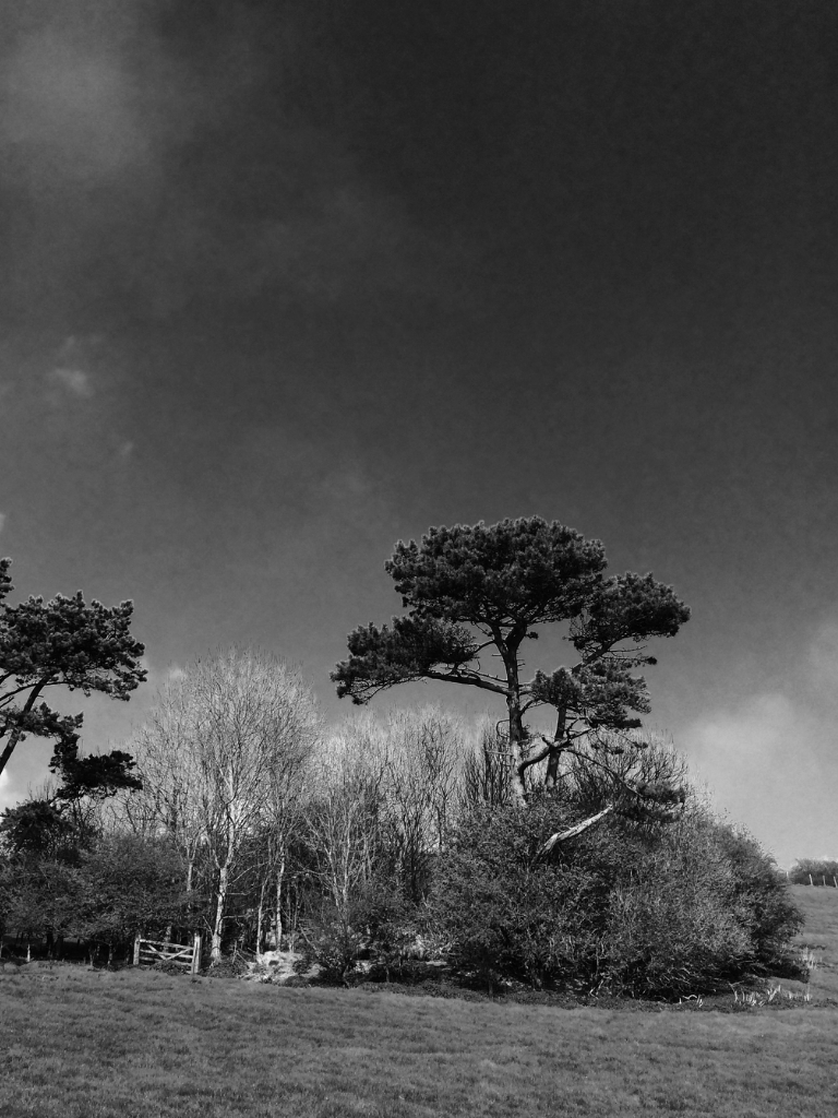 Copse near Dover in BW