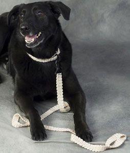 crochet dog collar and leash pattern