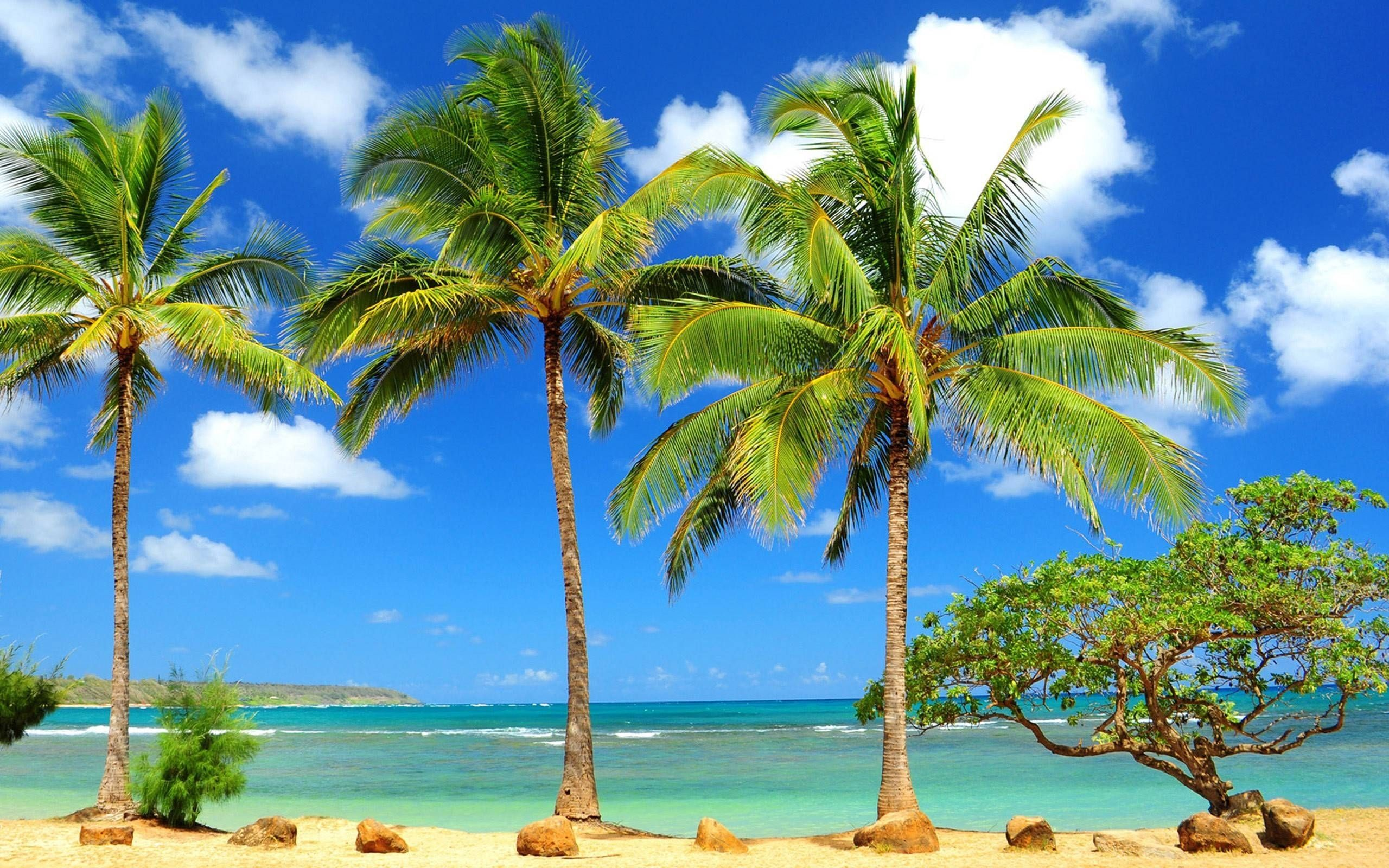 10 Best Palm Trees Hd Wallpaper Full Hd 1080p For Pc Desktop Beach Wallpaper Palm Trees Wallpaper Palm Tree Images