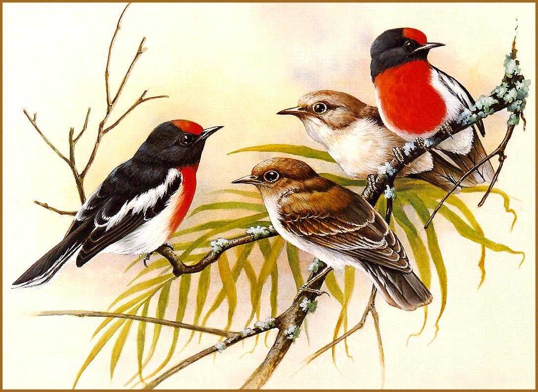 картинки иллюстрации птиц вызова контекстного меню