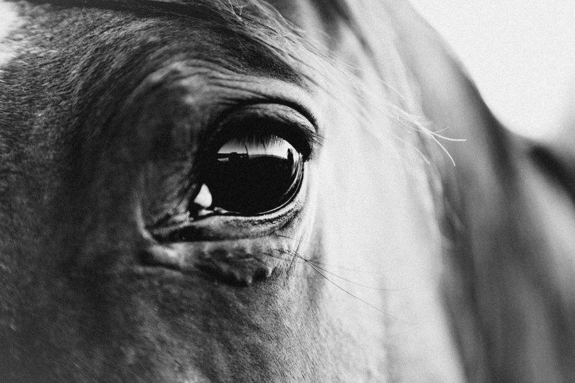 Victoria aguirre photographer argentina australia pampa horses