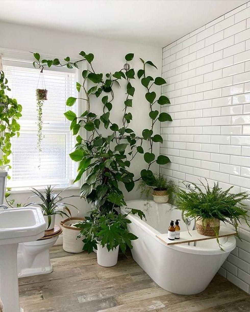 Pin On Plant Mama Plant Decor Indoor Bathroom Plants Decor Best Bathroom Plants Plant decor for bathroom