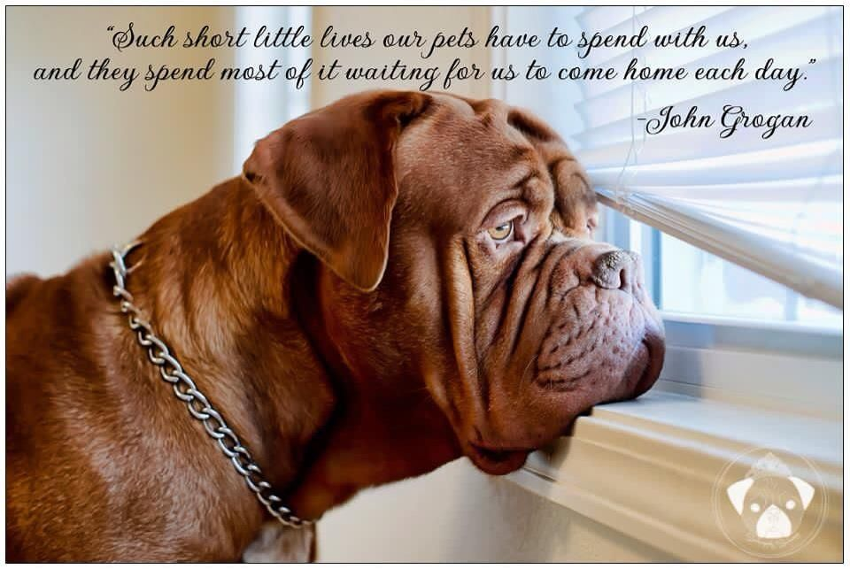Just used this quote a few days ago!!! French Mastiff