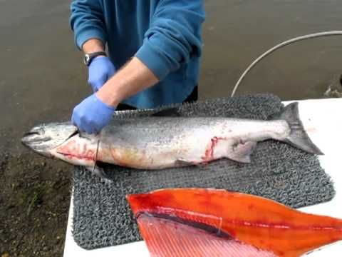 How To Fillet A Salmon Nushagak Style With Steelhead University Fish Salmon Fishing Cleaning Fish