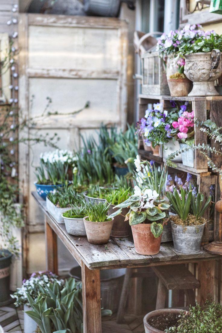 Blumenzwiebeln in Töpfe für Osterdekoration pflanzen. #easterdecor,  #Blumenzwiebeln #easterd…